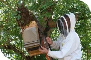 apiculteur velaux